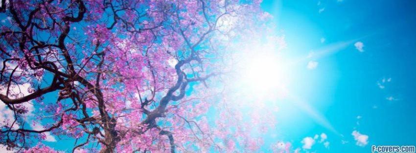 blooming-spring-facebook-cover-timeline-banner-for-fb