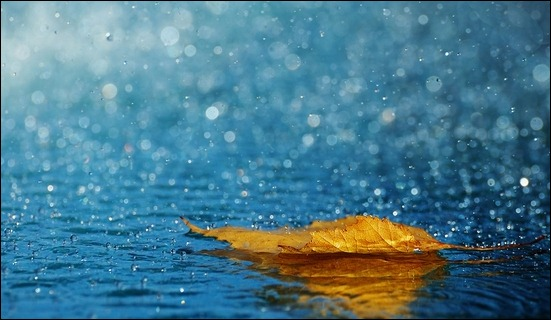 leaf-raindrops-autumn-water