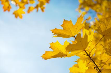 Herbstblätter unter blauem Himmel bei Sonnenschein